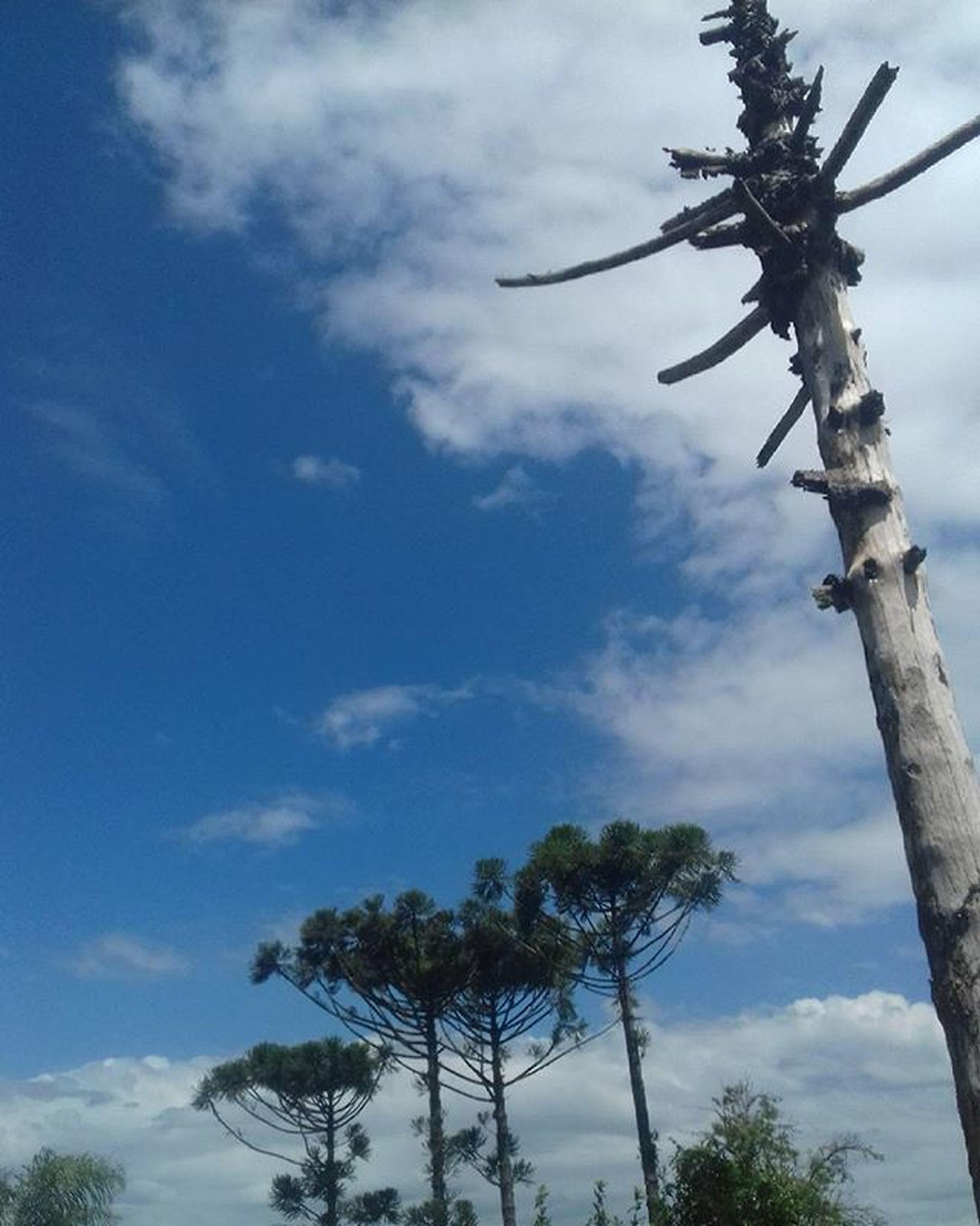low angle view, sky, tree, cloud - sky, tranquility, nature, cloudy, growth, cloud, tree trunk, branch, day, beauty in nature, outdoors, tranquil scene, no people, scenics, palm tree, blue, bare tree