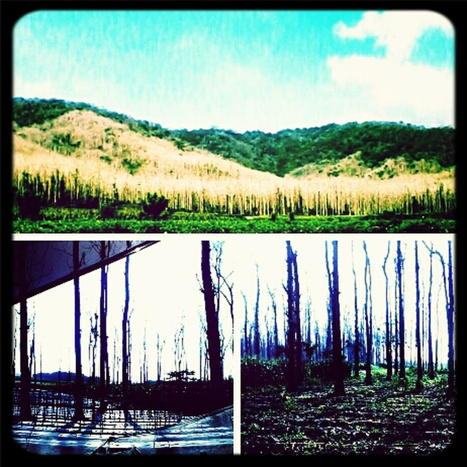 Naturelovers Pine Forest Pine Mountain! Peace And Calm Glory . . . Glory . . . ang' !!! Thnk You@eyeemm™