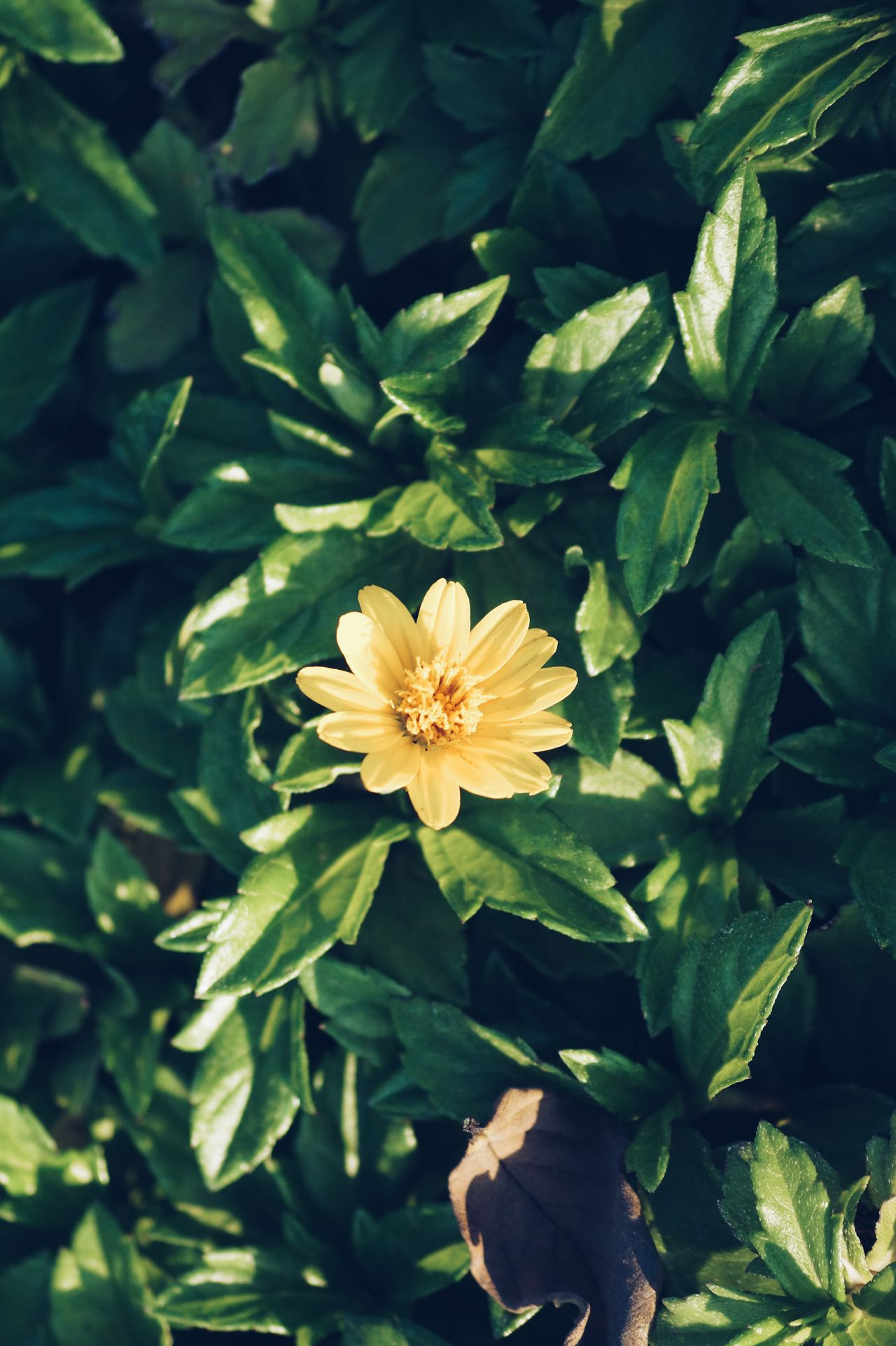 Flower Nature Leaf Beauty In Nature Growth Plant Petal Freshness Flower Head Fragility Blooming Outdoors No People Close-up Day
