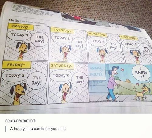 """This comic makes me so happy. 😁 It reminds me of Mick. I remember the very first moment I ever saw him. He was cowering in a cage at the humane society, between two dogs that looked like German Shepherds. The worker tried to talk us out of meeting Mick, because he had just been returned a second time that day, and he was """"so vicious"""" and he kept telling us that he was brought back because people were afraid for their children's safety.. And I ignored every thing the man said, got in the cage with Mick and sat down. That's the day I instantly found my best friend. He climbed right onto my lap, and gave me hundreds of kisses. This dog wasn't scary. This dog was misunderstood. And I needed him as much as he needed me. I remember that day like it was yesterday. I kind of wish it was, so I could relive all the years I had with him.. That day was the best day ever. I miss my bubby, but I'm glad he finally feels better. 💕 RestinPeaceBubby Chihuahua Dachshund Bubby Mysatan Imissyou Love"""