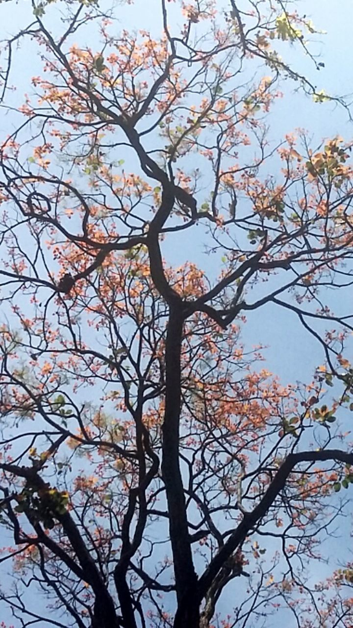 tree, branch, beauty in nature, growth, nature, no people, flower, low angle view, day, fragility, outdoors, tranquility, springtime, sky, scenics, freshness, clear sky, close-up