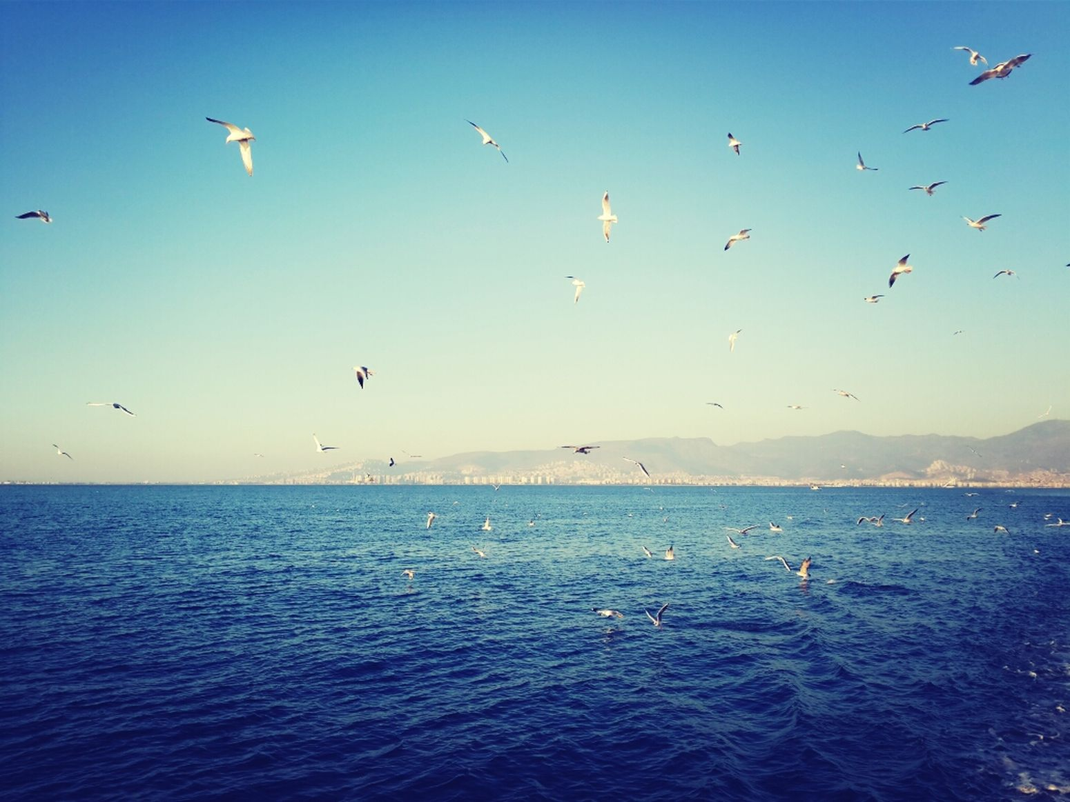 Sea Seagulls Sky Sunny Day #izmir #turkey