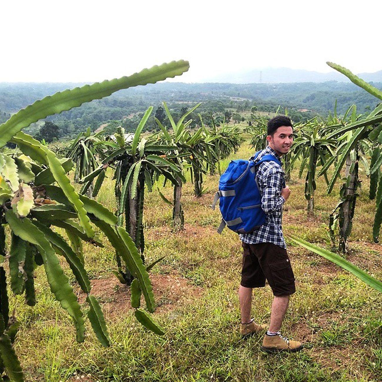 Mungkin saja buah naga yg pernah kamu makan itu berasal dari kebun ini.. Bags by : @sollubags Short pants by : @busanaarshop Lokasi : Dragon Fruits Garden, Cipatat Padalarang, Kab. Bandung Barat. Ridwanderful JarambahBandung DiBawahLangitBandung BandungIsMe TravelingPakeReceh