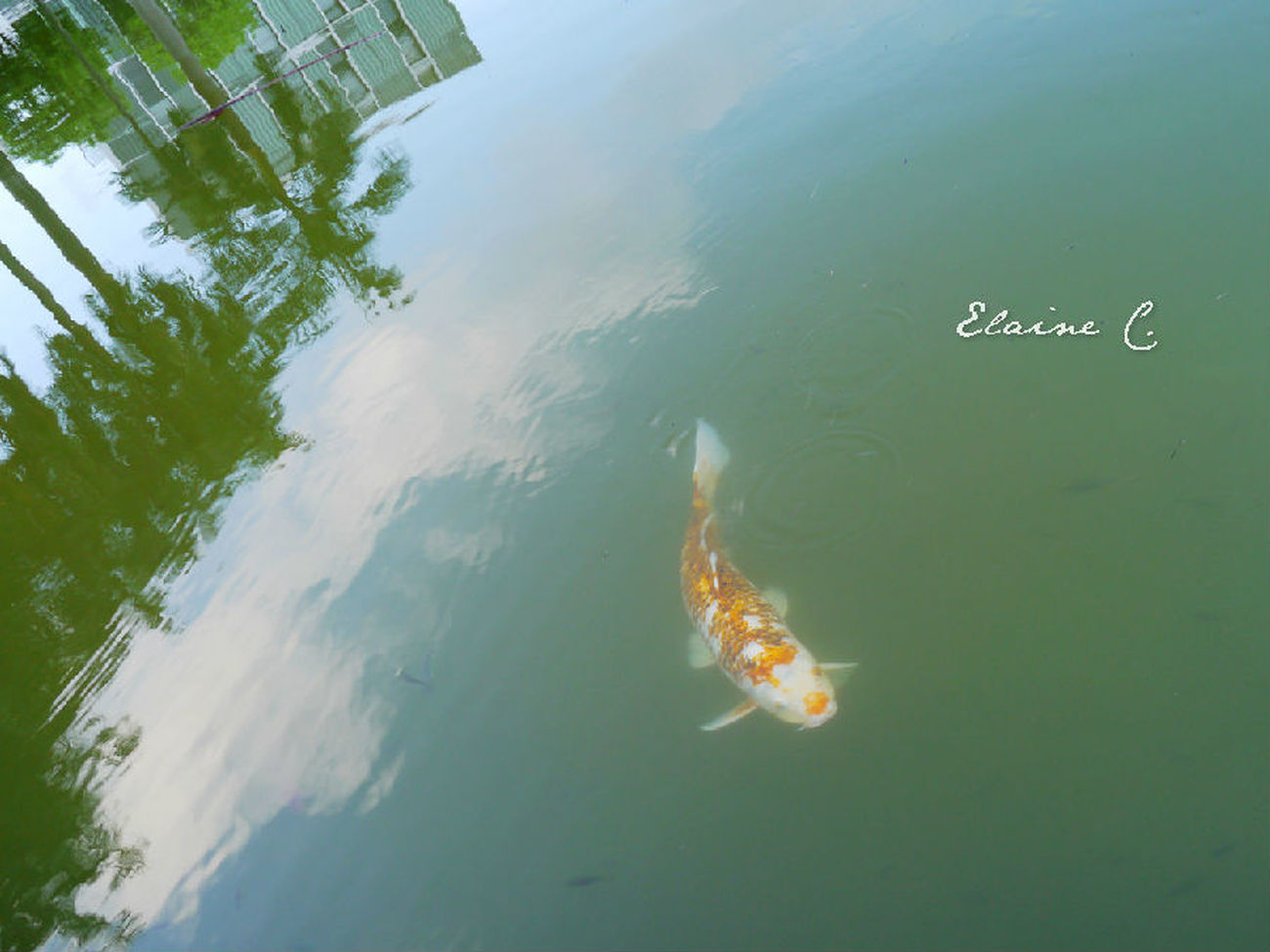 Art Photograph Taking Photos Szu fish in sky