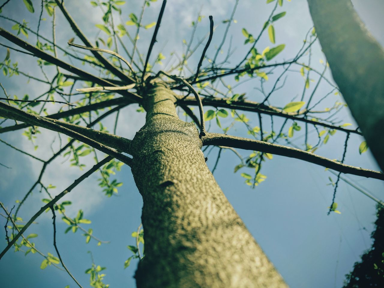 tree, low angle view, day, branch, outdoors, green color, nature, animals in the wild, no people, animal themes, animal wildlife, one animal, close-up, beauty in nature, perching, sky