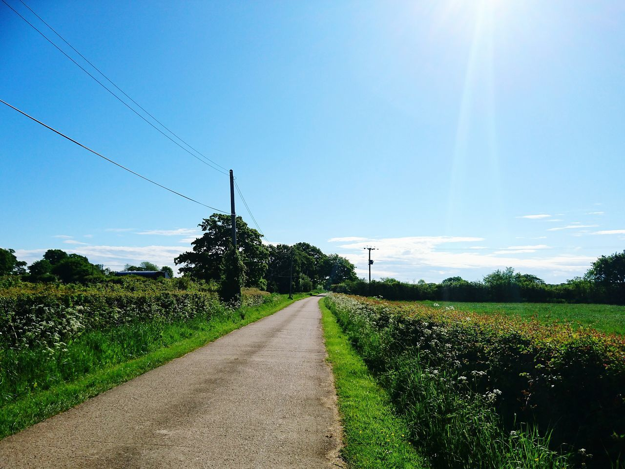 field, nature, landscape, day, the way forward, tranquility, tranquil scene, agriculture, sky, beauty in nature, growth, rural scene, no people, outdoors, scenics, tree, sunlight, road, grass, clear sky