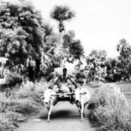 Peeping outside my car and look what i saw...,. Cow Bullockcart Village People Hardwork Labour Pain Summer Trees Poor  Day Rain Road Mud Murshidabad WestBengal Rajgram Home Holiday Vacation
