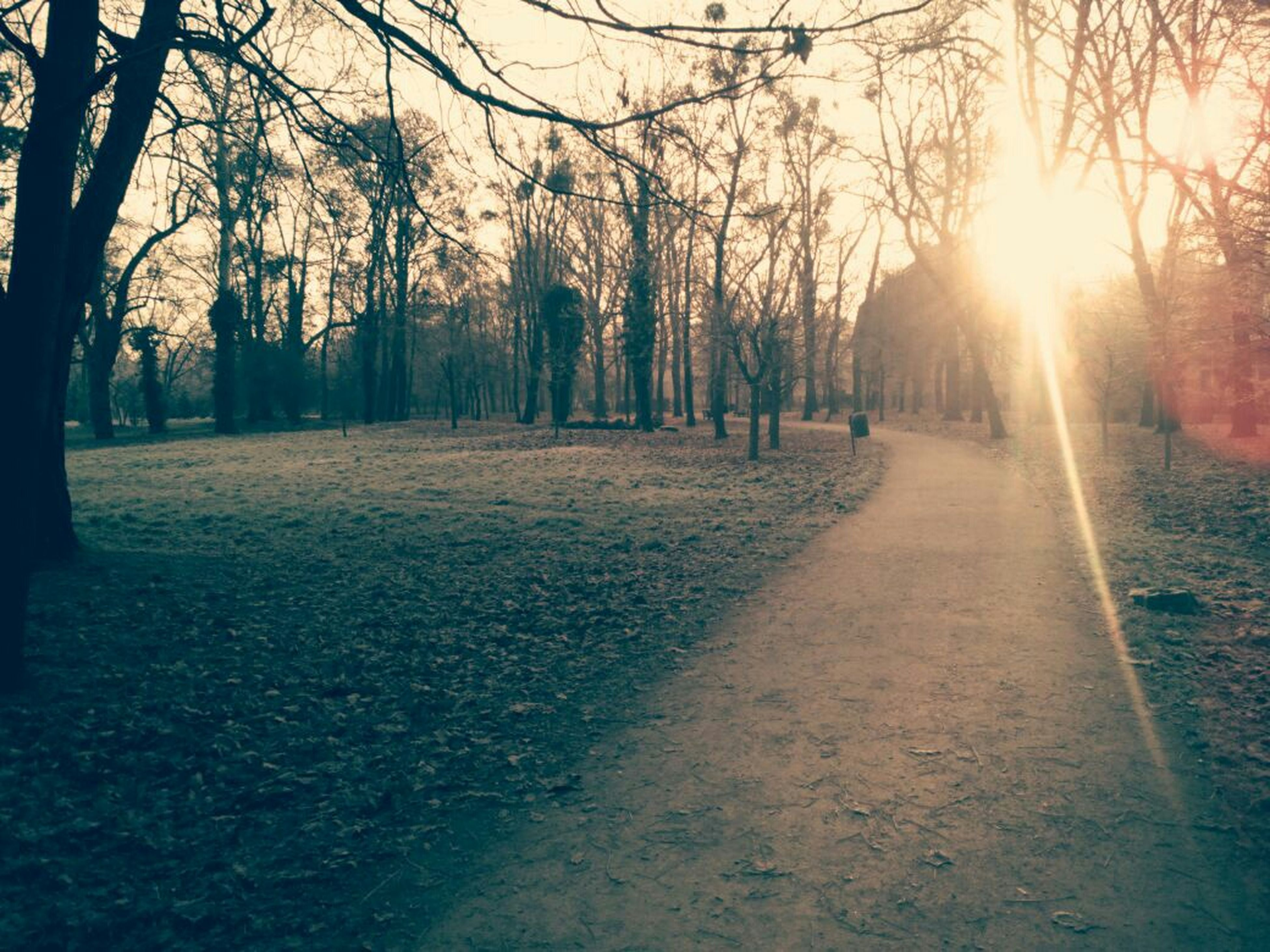 tree, sun, sunbeam, sunlight, lens flare, tranquility, tranquil scene, nature, tree trunk, sunset, the way forward, beauty in nature, scenics, growth, sunny, shadow, back lit, landscape, branch, footpath