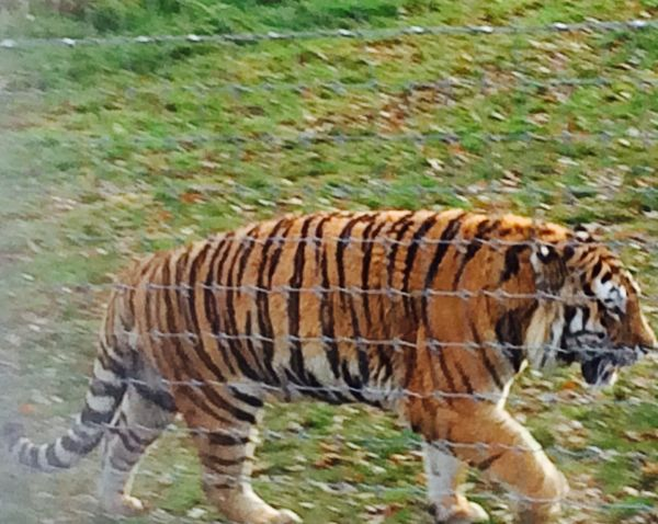 Older Photo Animal Themes Mammal Field No People Grass Nature Outdoors Animals In The Wild Day