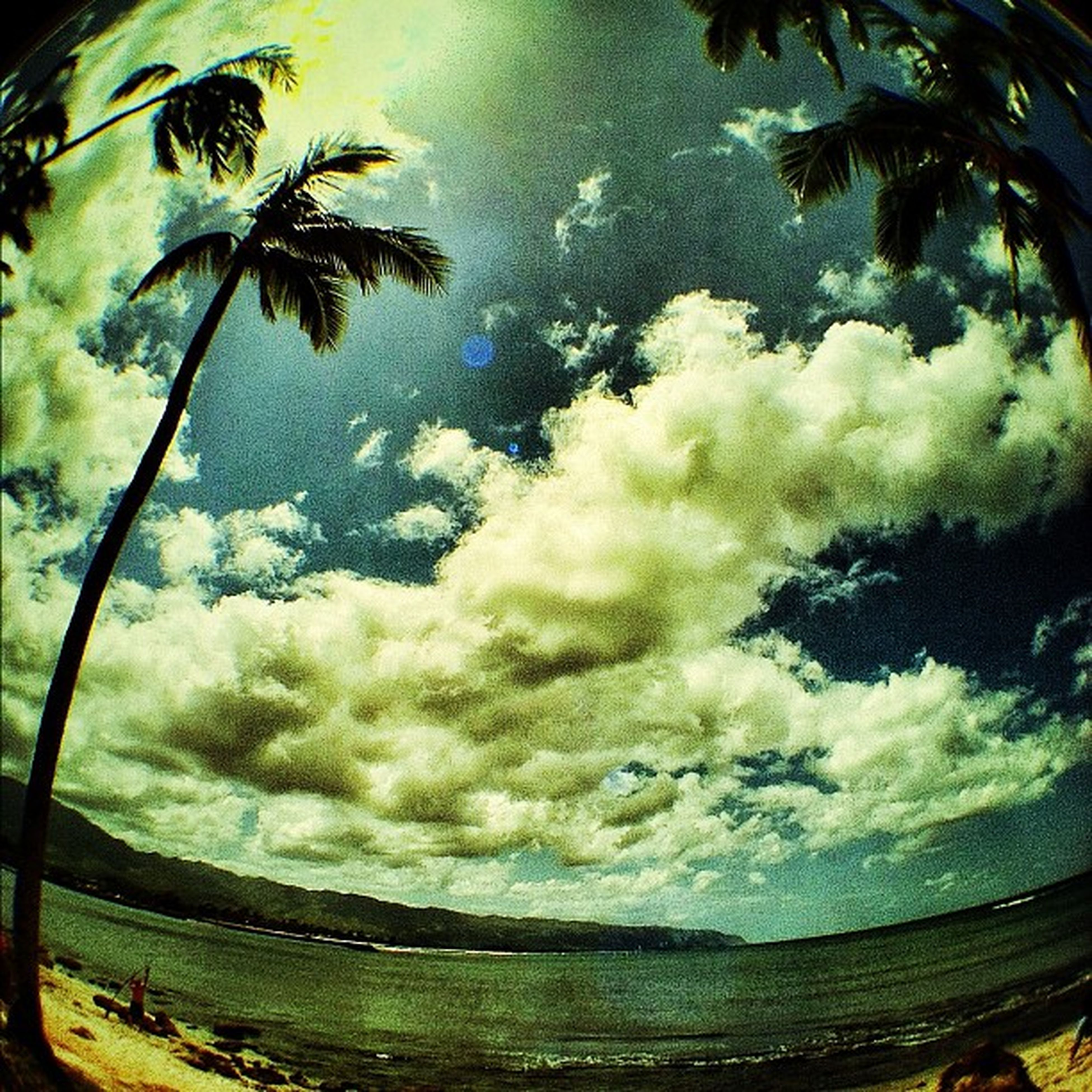 sky, cloud - sky, water, tree, palm tree, cloudy, beauty in nature, nature, tranquility, scenics, cloud, reflection, growth, tranquil scene, leaf, sea, green color, day, outdoors, no people