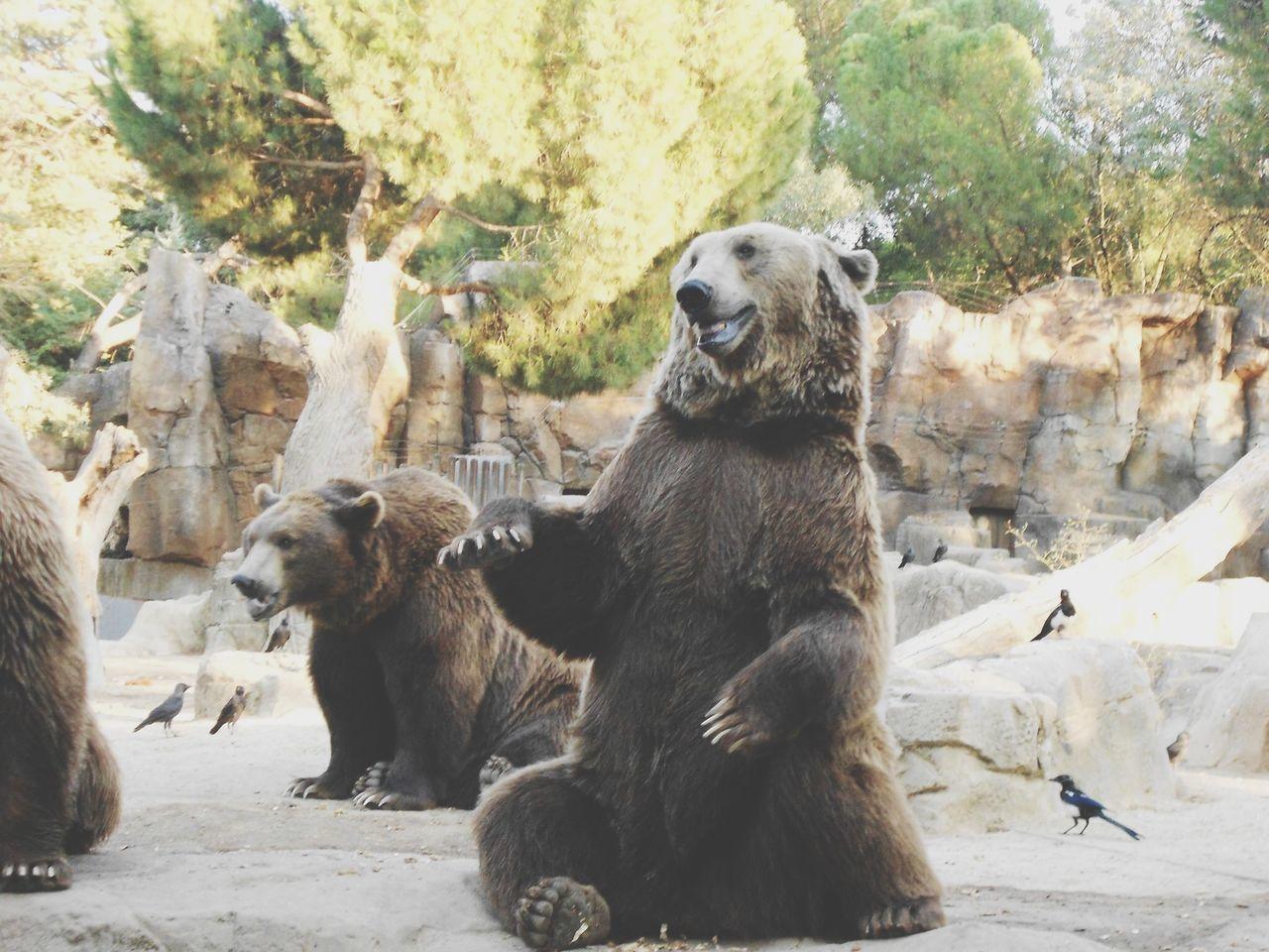 Animals Nature Bear