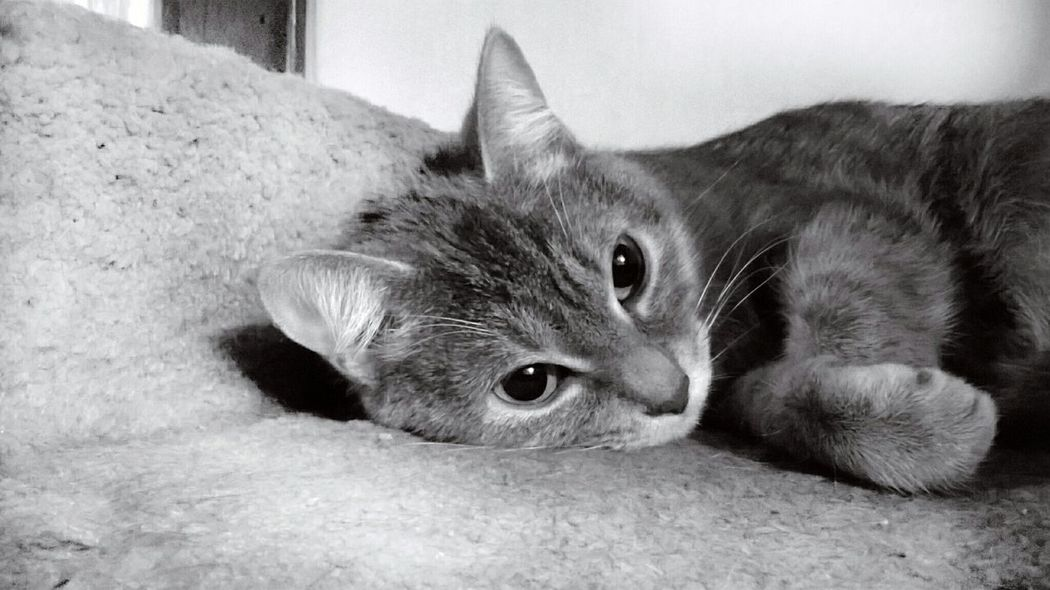 Cats Kitten Eyem Cute Cats Black And White My Best Photo 2014 Adorable