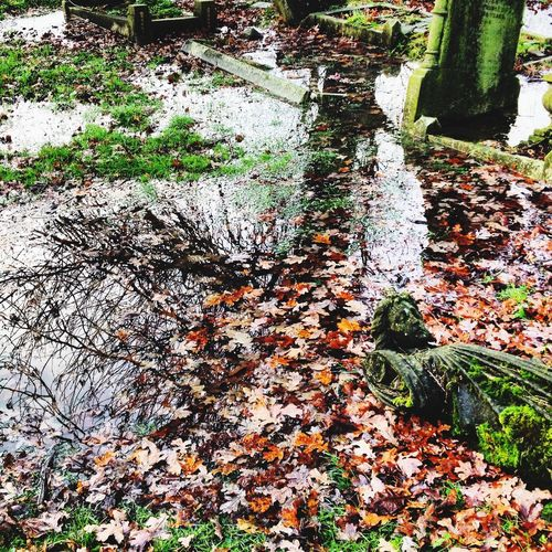 Bright & angelic reflections in a tumble down & flooded graveyard. Mother Nature having her way with the world. Natural Beauty Statue Sleeping Mother Nature Architecture London Cemetery Cemetery_shots Cemetery Photography Abandoned Places Abandoned Abandoned & Derelict Angels Angel Angel Wings Angel Statue Beauty Colour No People