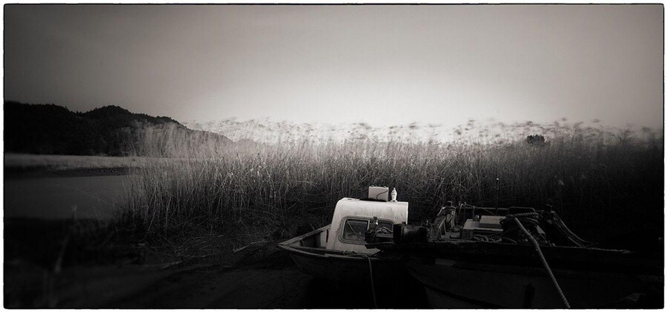 Wind Blowing  Seaside Blackandwhite Long Exposure Reeds Anchor Stillness
