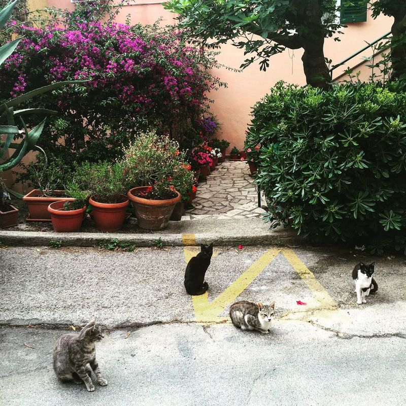 Cats Taking Photos Cats Cat Lovers Tuscany Seatown