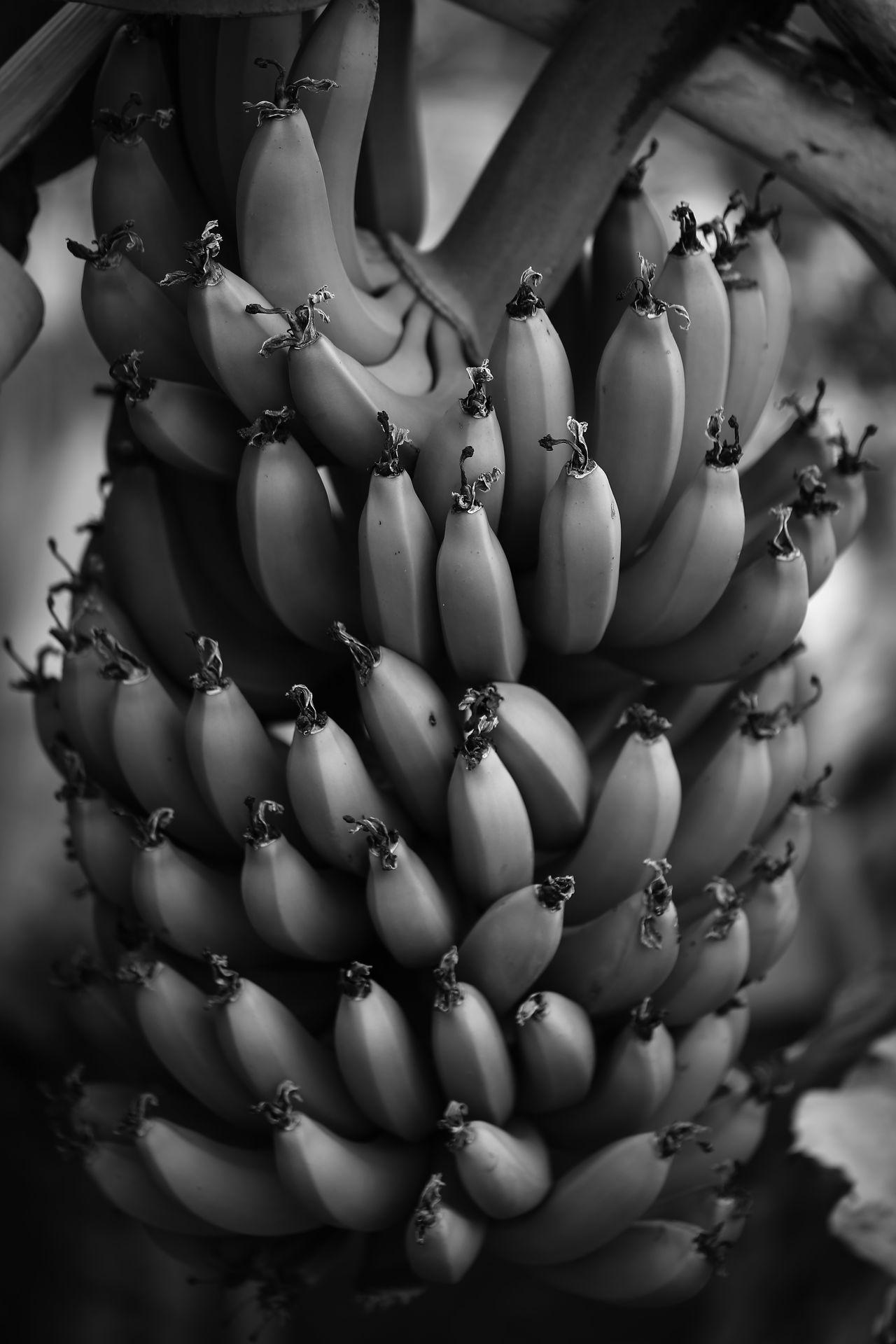 Abundance B&w Banana Fruit Fruits Healthy Eating Ile Intense Reunion Island Régime