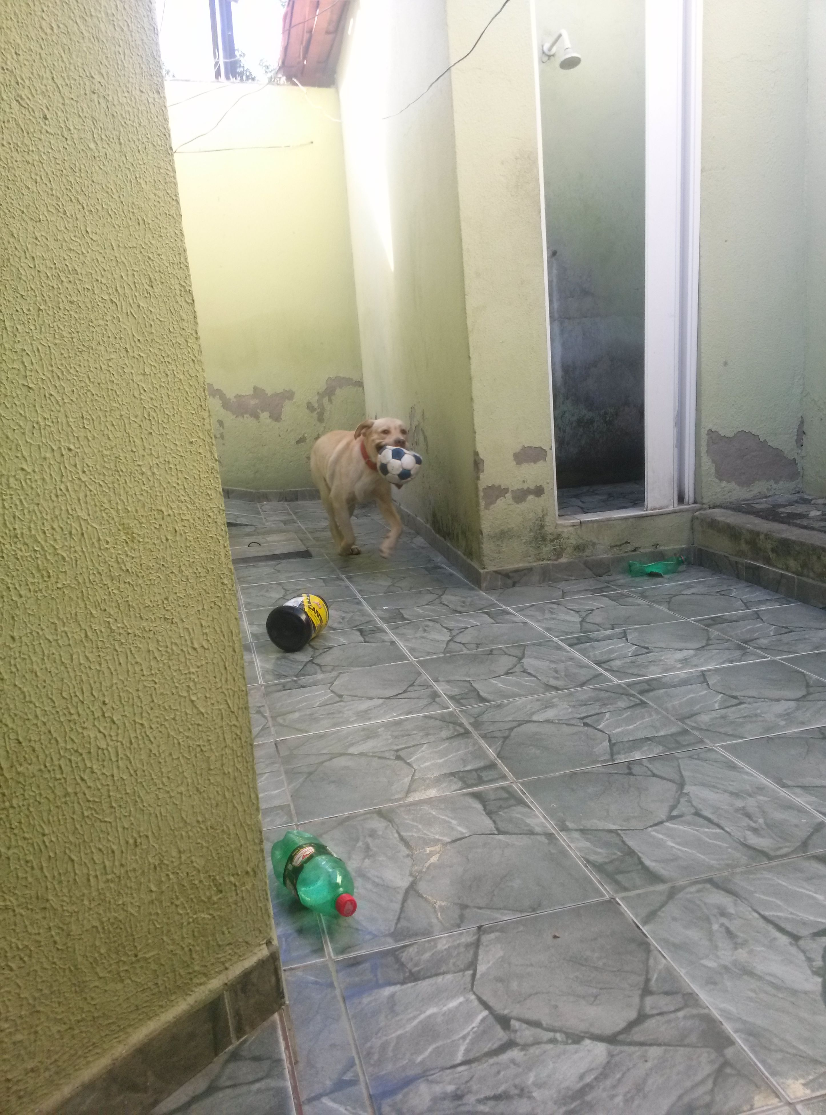 indoors, tiled floor, built structure, flooring, architecture, door, window, tile, sunlight, empty, animal themes, house, day, no people, floor, wall - building feature, paving stone, entrance, building, domestic animals