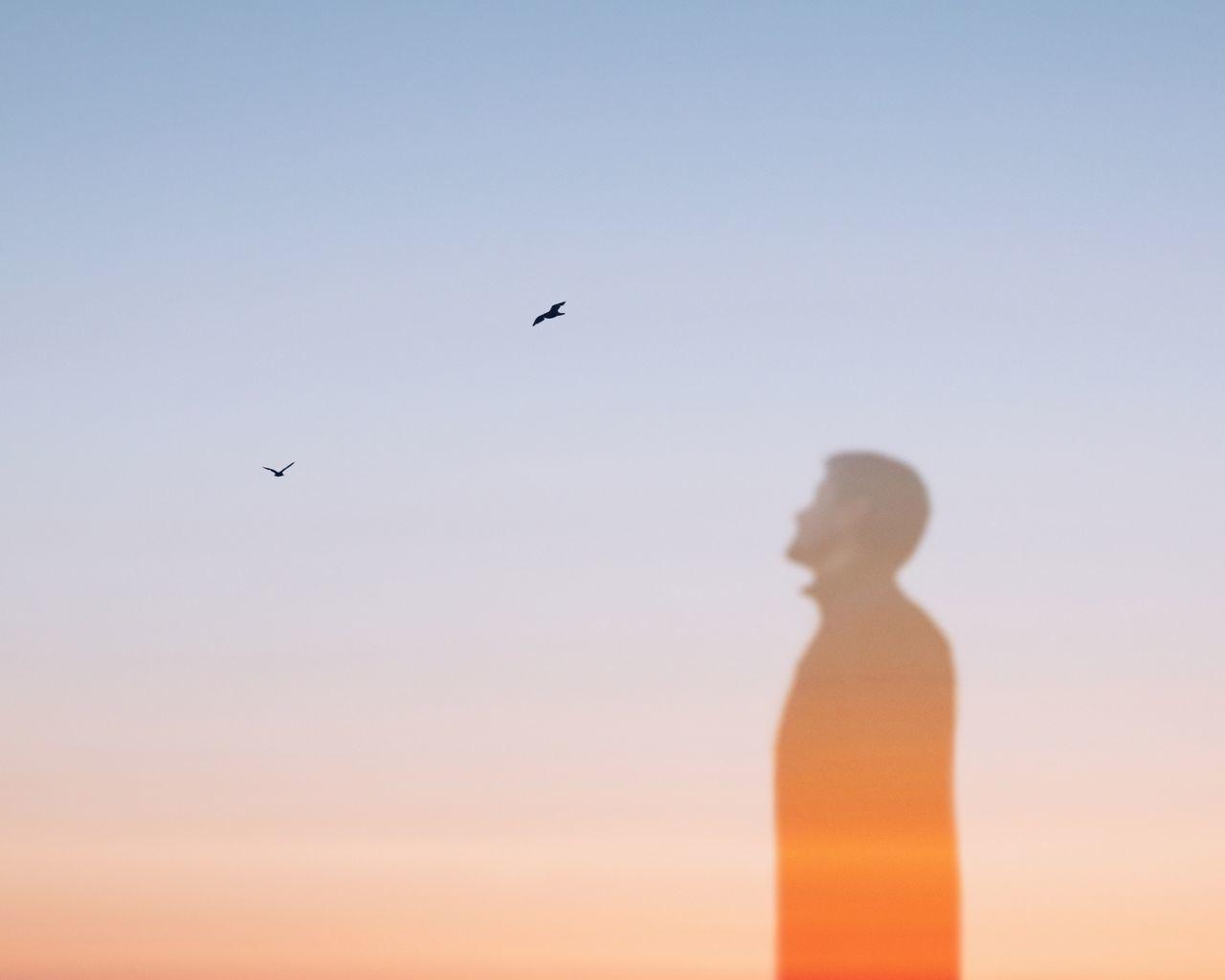 bird Clear sky sky outdoors dawn Multiple Exposures transparent Ghost Dream Escaping cold temperature EyeEm Best Edits EyeEmBestPics beauty in Nature Silhouette EyeEm Best Shots TheWeekOnEyeEM