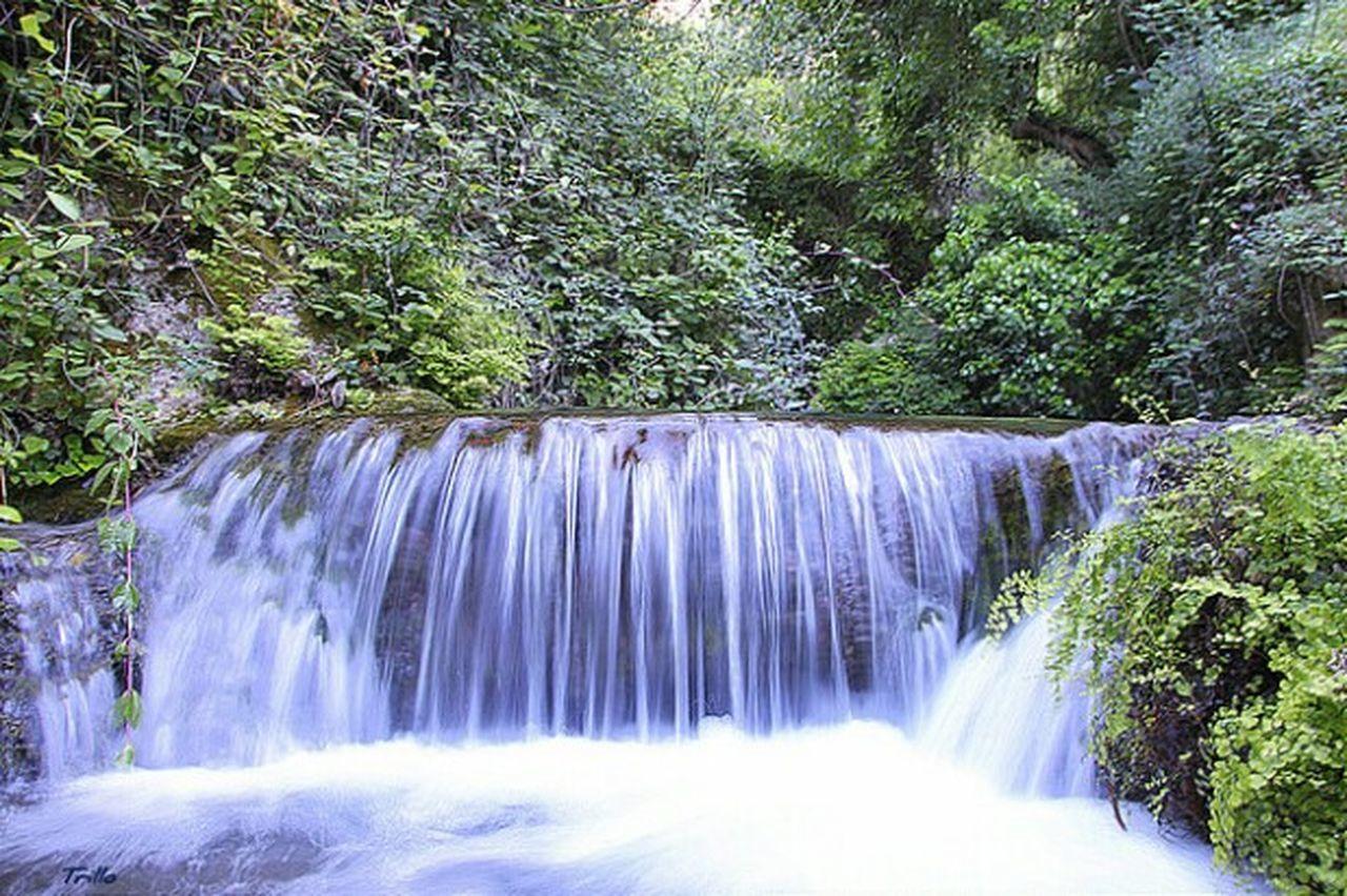 Aguaviva Nature Naturaleza Letur My Year My View