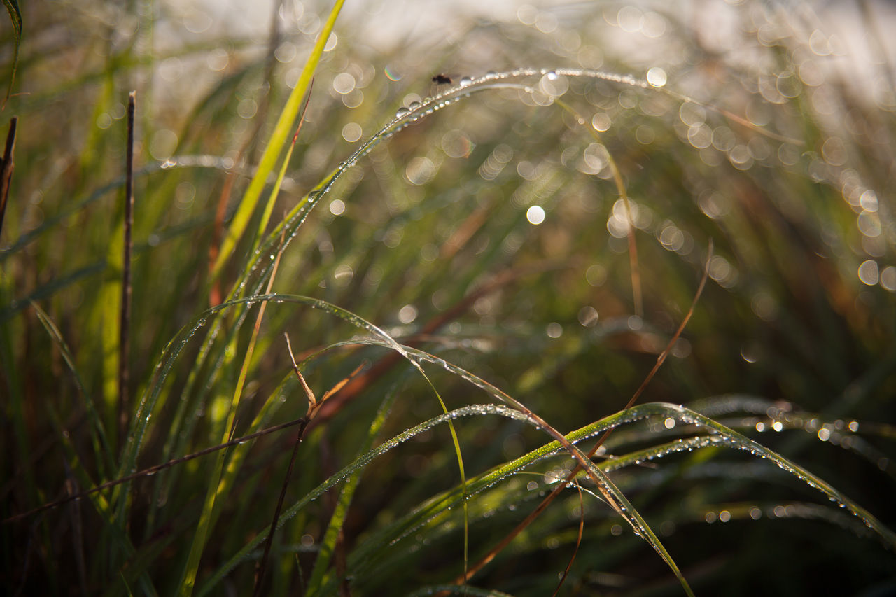 water, drop, wet, nature, rain, freshness, raindrop, growth, plant, beauty in nature, droplet, grass, outdoors, fragility, focus on foreground, spider web, close-up, motion, no people, leaf, day, green color, purity, spraying, web, defocused, splashing droplet, dripping