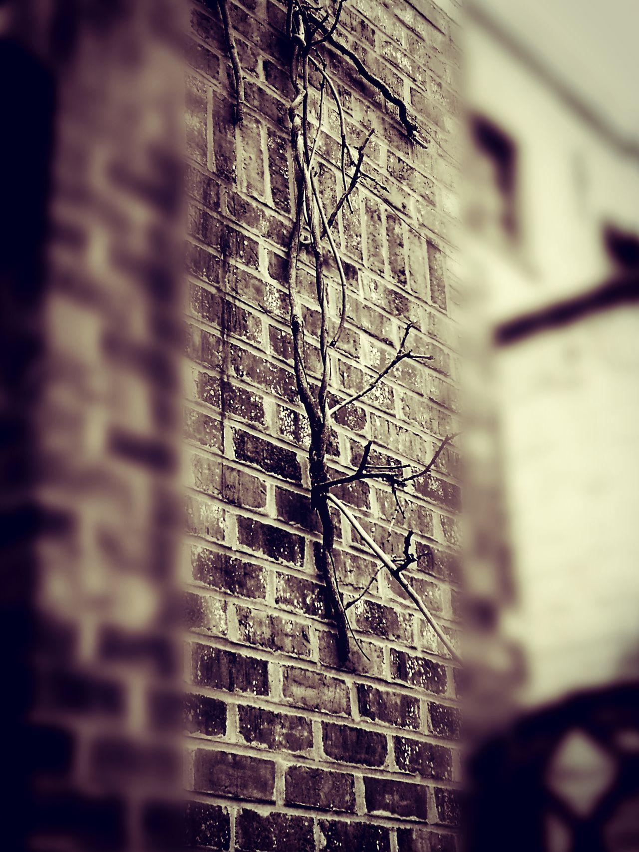 Un reste de glicine, un reste du passé.Hello World Belgium. Belgique. Belgie. Belgien. Etc. Bruxelles Bruxelles-Capital Bruxelles Ma Belle Glicine Nature Naturelovers Nature Photography First Eyeem Photo