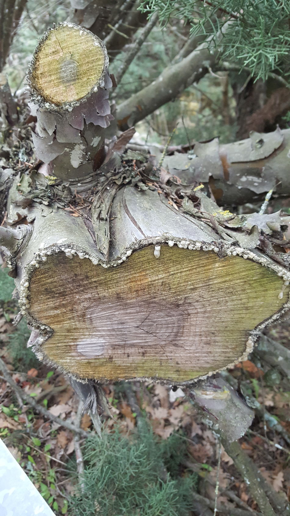 Nature Outdoors Tree Wood Cut Wood Mountain Material - Wood