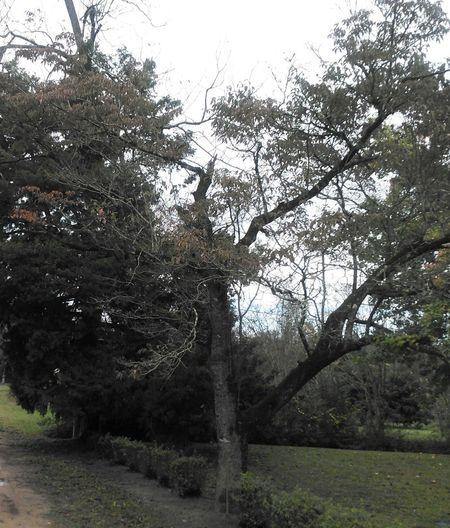 Nature Photography Natural Beauty Dogwood Tree Trees And Sky
