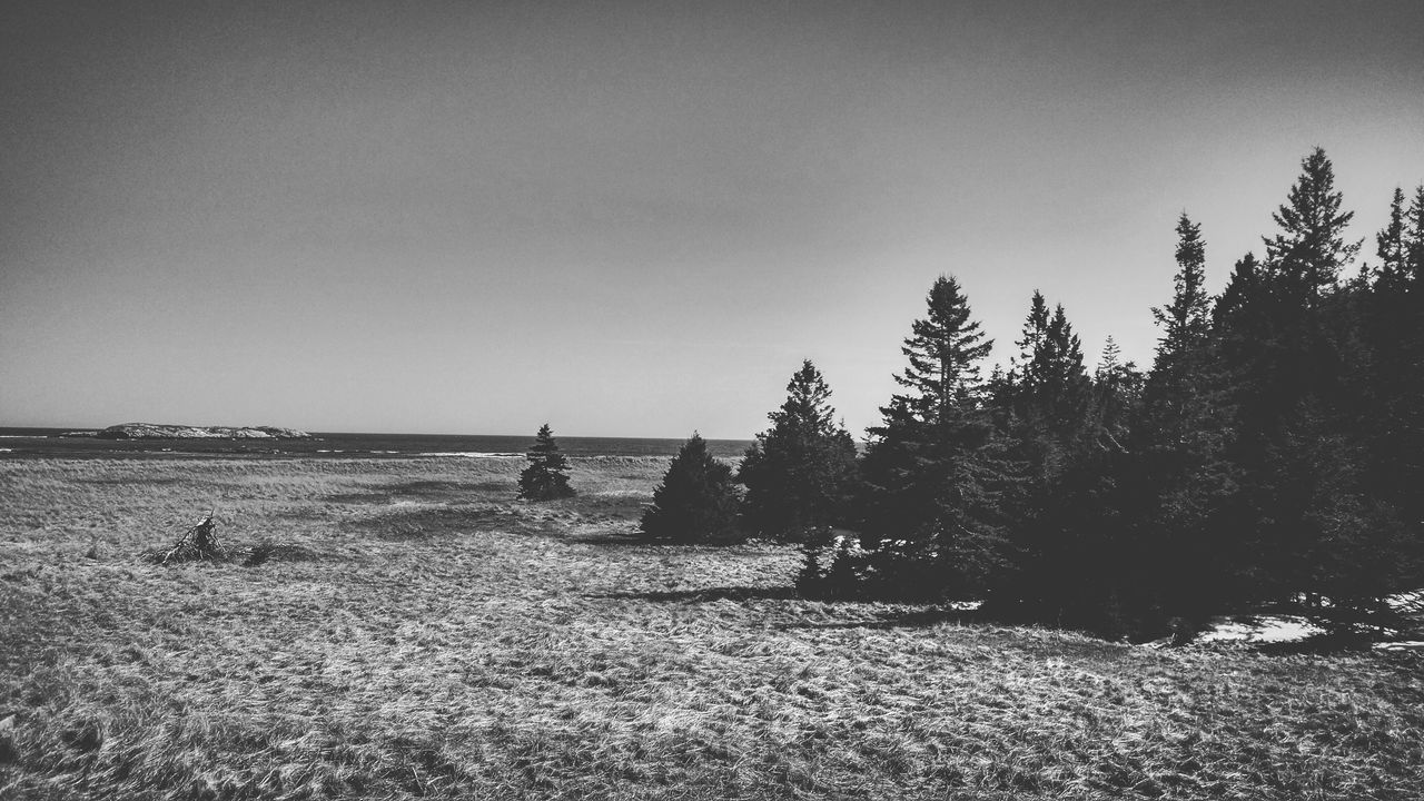 Where the forest ends Nature Tranquility Tranquil Scene Scenics Tree Beauty In Nature Day Landscape Sky Outdoors No People Clear Sky Forest Woods Blackandwhite EyeEmNewHere Growth Fog Dark Ocean Beach Ocean View Oceanside Sand Sea
