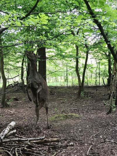Tree Nature Animal Themes Mammal Animal Wildlife One Animal Tree Trunk Day Animals In The Wild No People Forest Outdoors