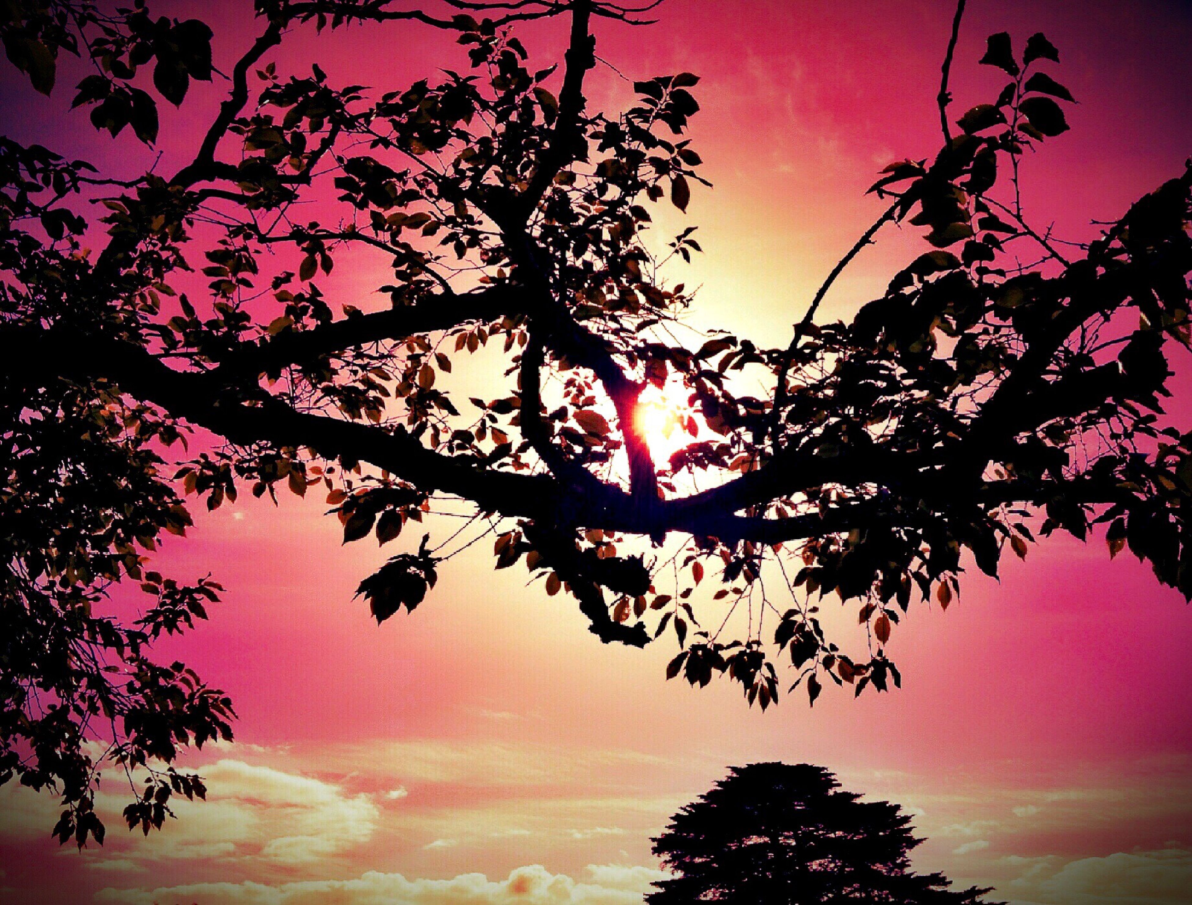tree, sunset, silhouette, beauty in nature, tranquility, sky, low angle view, scenics, branch, tranquil scene, nature, orange color, growth, sun, idyllic, cloud - sky, red, outdoors, no people, majestic