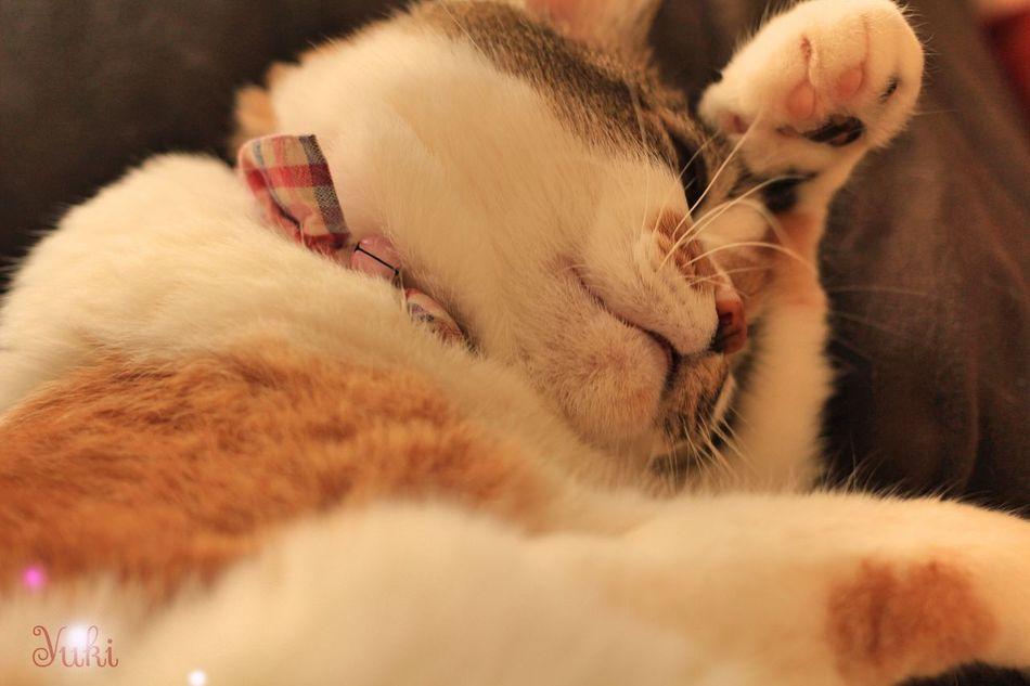 She's my treasure. EyeEm Best Shots CanonEoskissX7 My Cat Cat♡ Cat Lovers Canon ウチの姫様 Relaxing