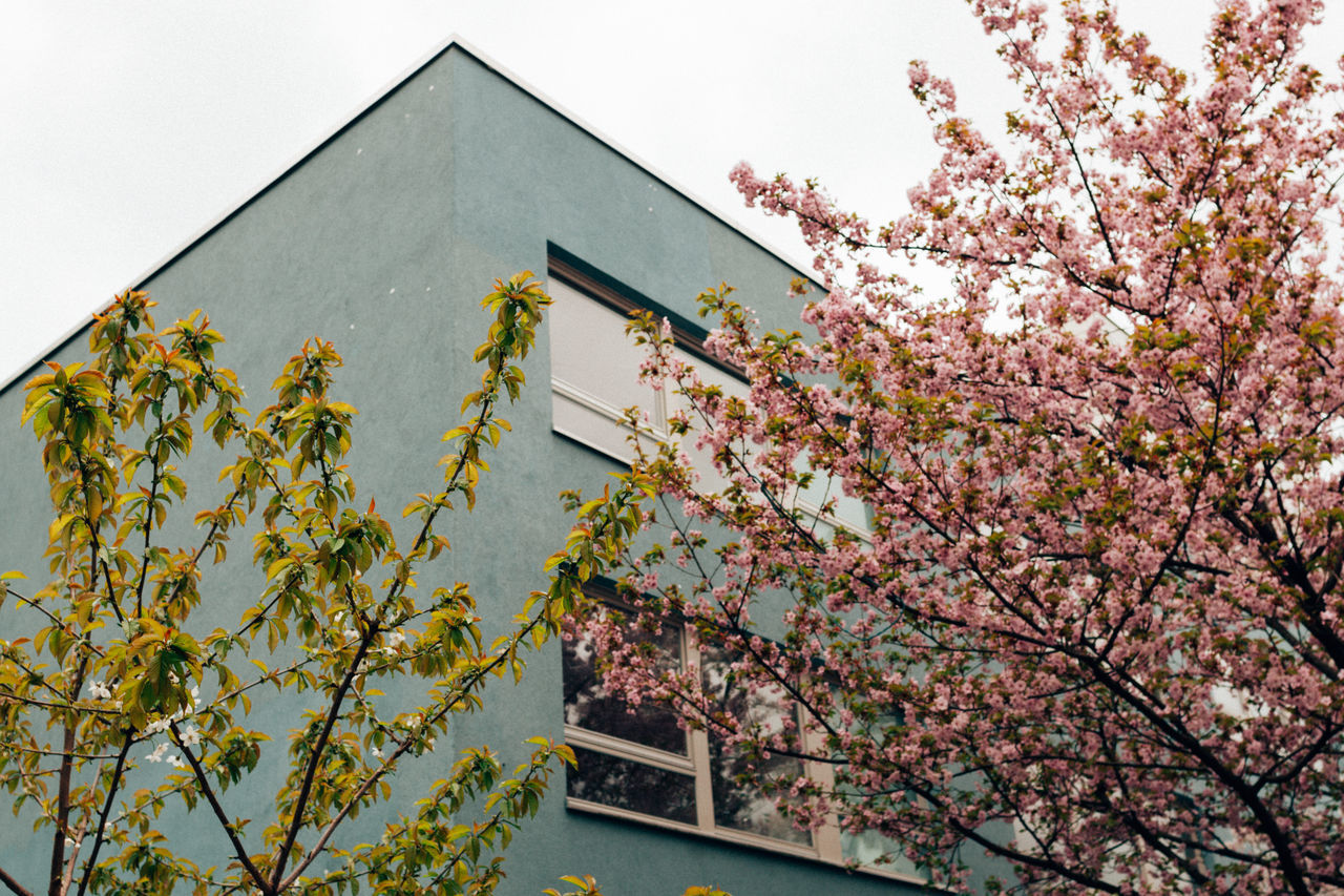 Berlin Spring II Architecture Beauty In Nature Berlin Berliner Ansichten Blossom Branch Building Exterior Built Structure Close-up Day Flower Fragility Freshness Growth Leaf Low Angle View Nature No People Outdoors Pink Color Plant Sky Spring Springtime Tree