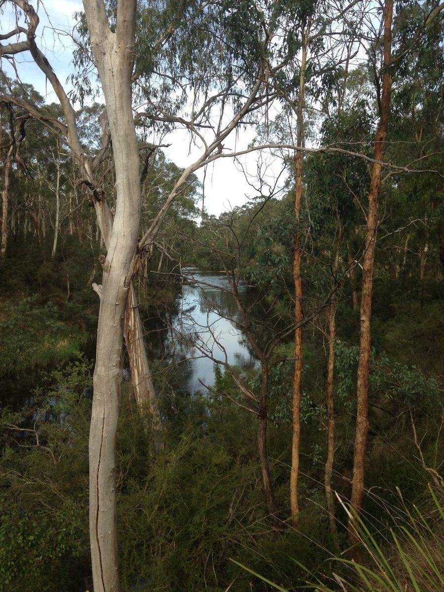 Yarra River Warrandyte Water Reflections