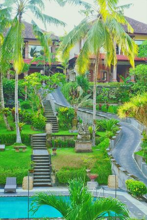 The Artini Resort, Ubud Hotelpool Resort Hotel Hotelview Hotel Nature Photography Holiday - Event Green Color Holiday Outdoors Holidays Swimming Pool Garden Photography Day Hotel View Hotels And Resorts HotelsandResorts Ubud, Bali Beauty In Nature Tree