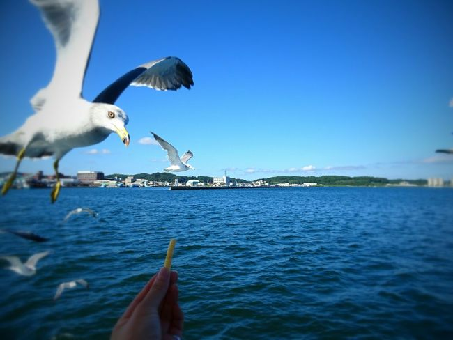 Noto Japan Seagulls Seagulls And Sea Seagulls Flying Flying Sea Eating!  Bird Eyeem Photography Hello World Holiday Taking Photos Week On Eyeem Blue The Week On EyeEem Blue Sky Blue Sea