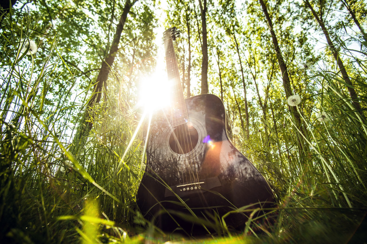 lens flare, nature, tree, sunbeam, sun, sunlight, outdoors, low angle view, mammal, domestic animals, day, one animal, growth, real people, beauty in nature, forest, grass, one person, men, sky, people
