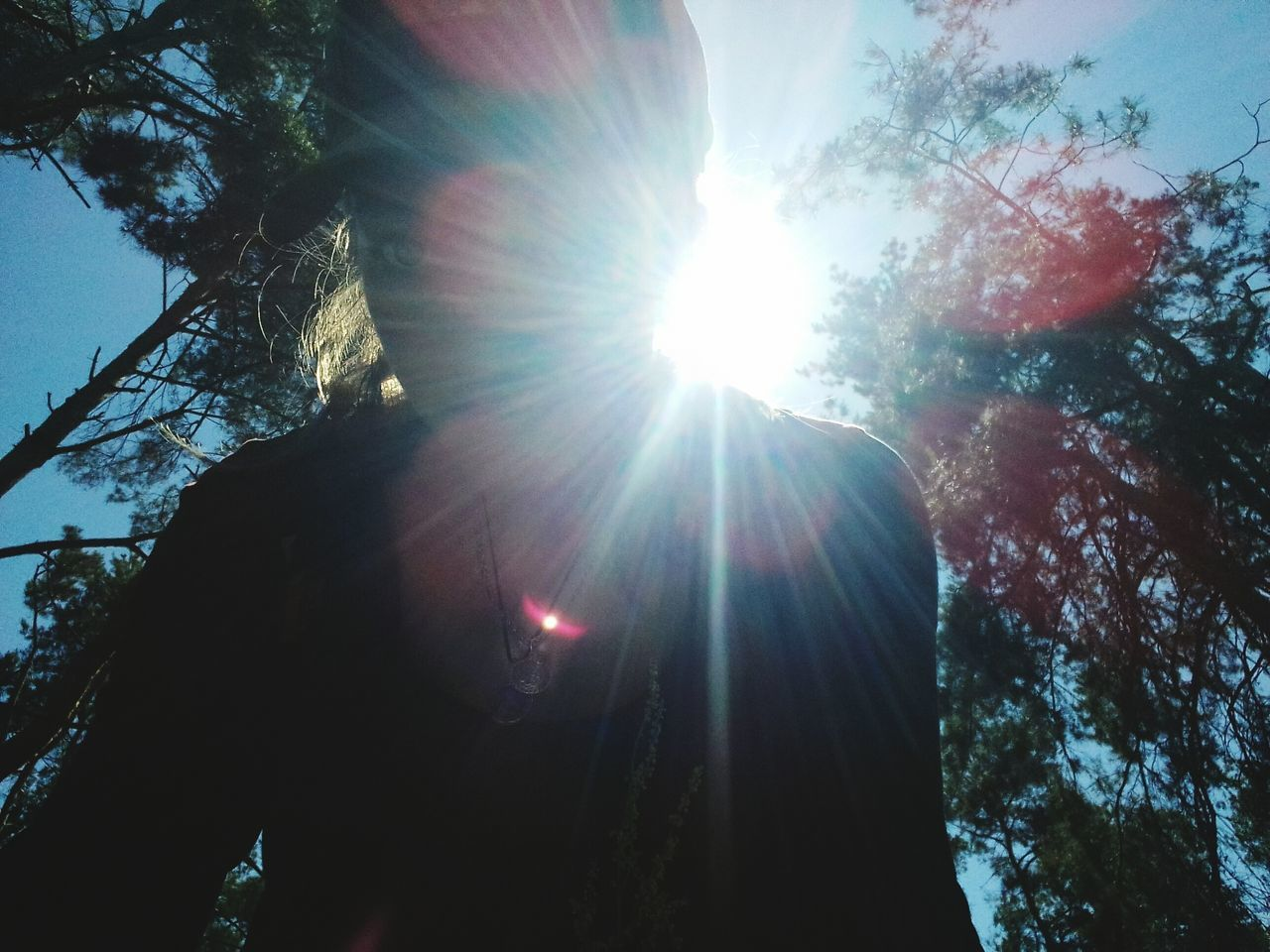 sunbeam, sun, lens flare, sunlight, tree, bright, nature, sunny, low angle view, shining, outdoors, day, one person, growth, branch, beauty in nature, sky, people