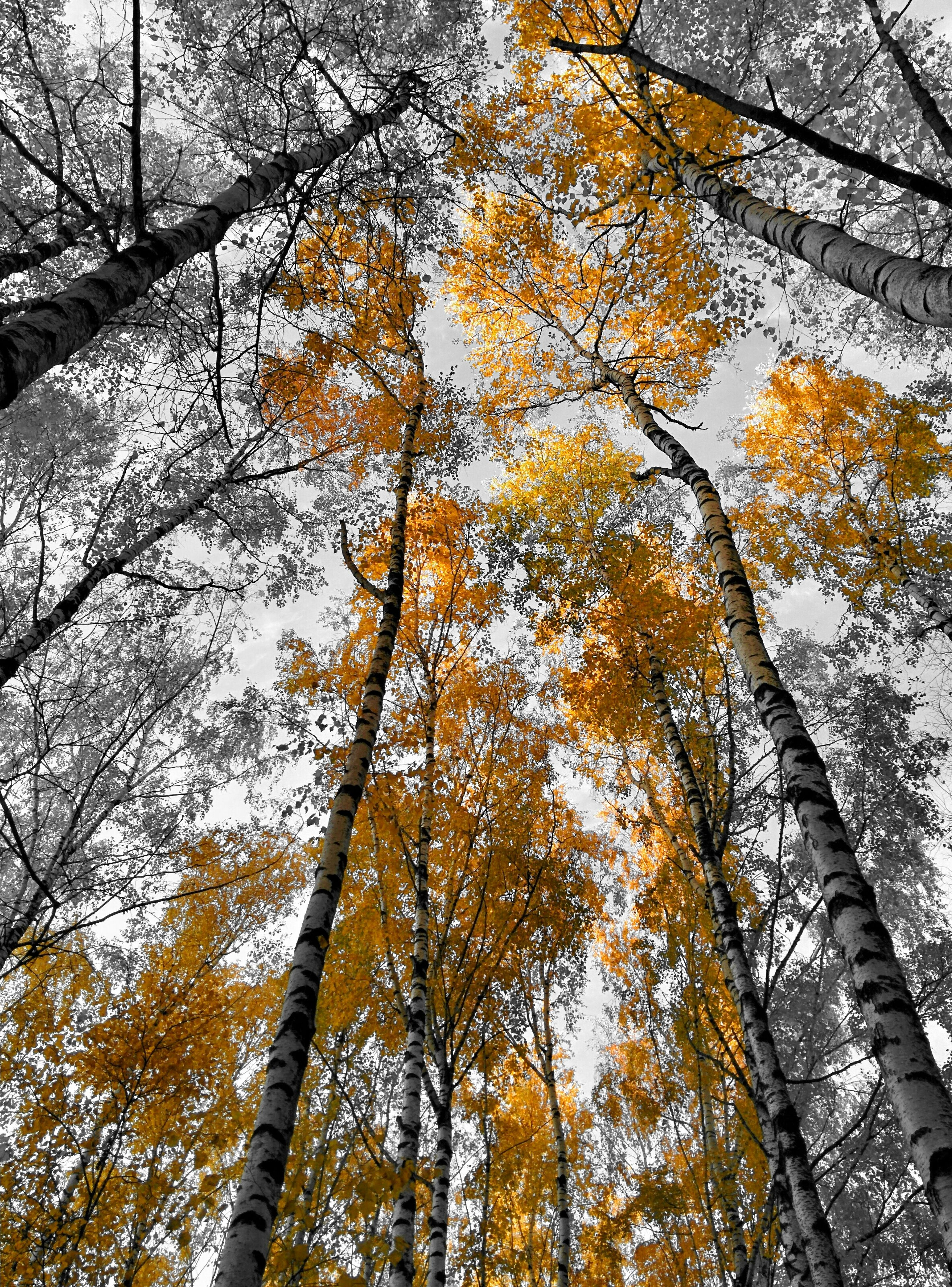 tree, branch, low angle view, tree trunk, growth, autumn, nature, season, yellow, change, tranquility, beauty in nature, forest, day, woodland, scenics, tranquil scene, no people, outdoors, sky