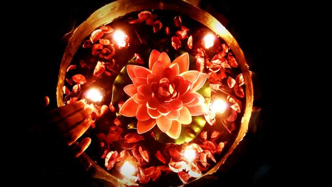 Lotus Lotus Lantern Festival Lotus Pond From My Point Of View Malephotographerofthemonth A Room With A View Check This Out Light Light Festival How You Celebrate Holidays Festivaloflights Malephotographerofthemont Deepawali Diwali Celebration Art DOLFFS Oo