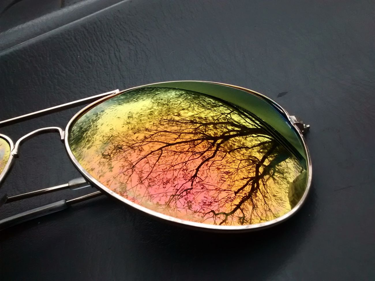 Day No People Sun Glasses Nature árbol Tree Clima Reflejos Colores Enfoque Fotografia Potography