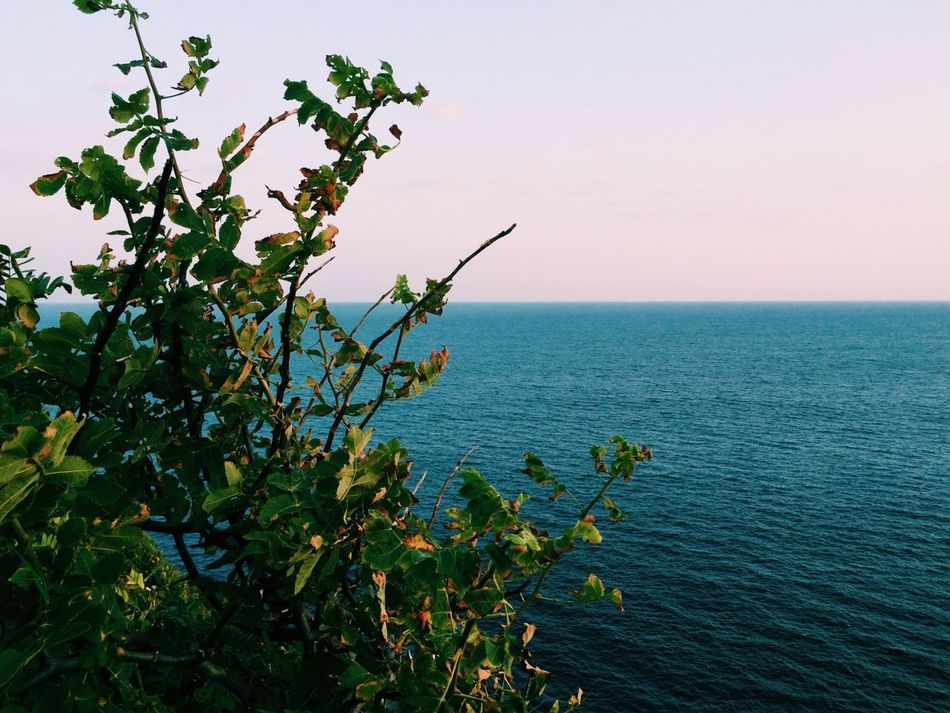 Beauty In Nature Clear Sky Day Growth Horizon Over Water Idyllic Nature No People Plant Sea Sky Tranquil Scene Tranquility EyeEm Best Shots VSCO VSCO Cam EyeEm Nature Lover Vscogood