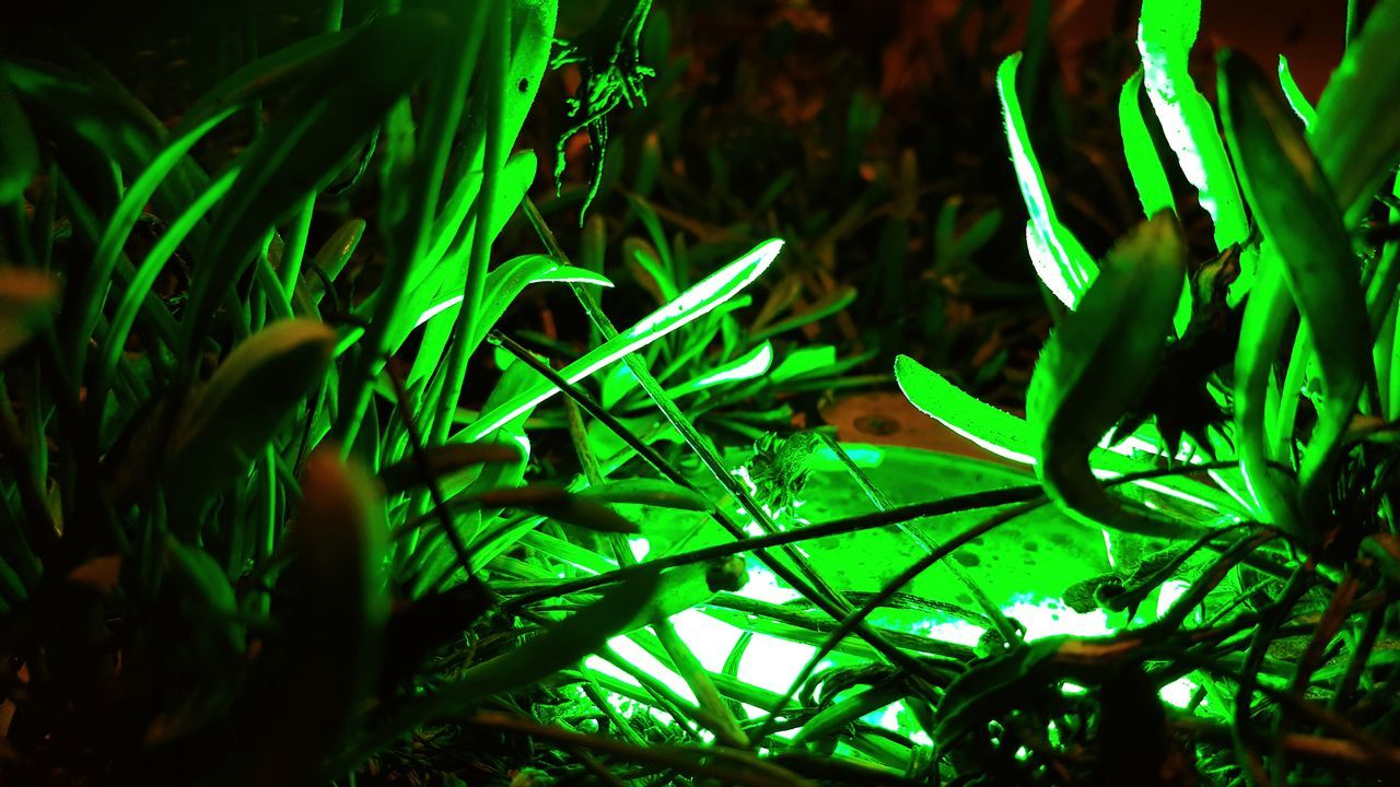 green color, growth, night, no people, plant, nature, leaf, close-up, outdoors, beauty in nature, grass