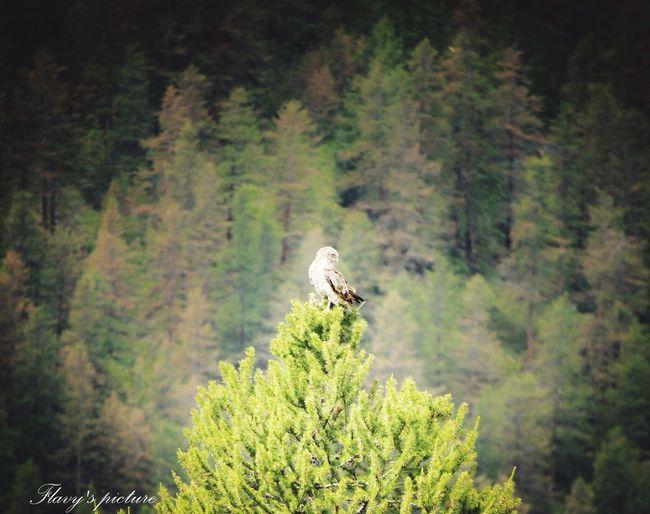 Hawk Mountains France Littlevillage Freedom