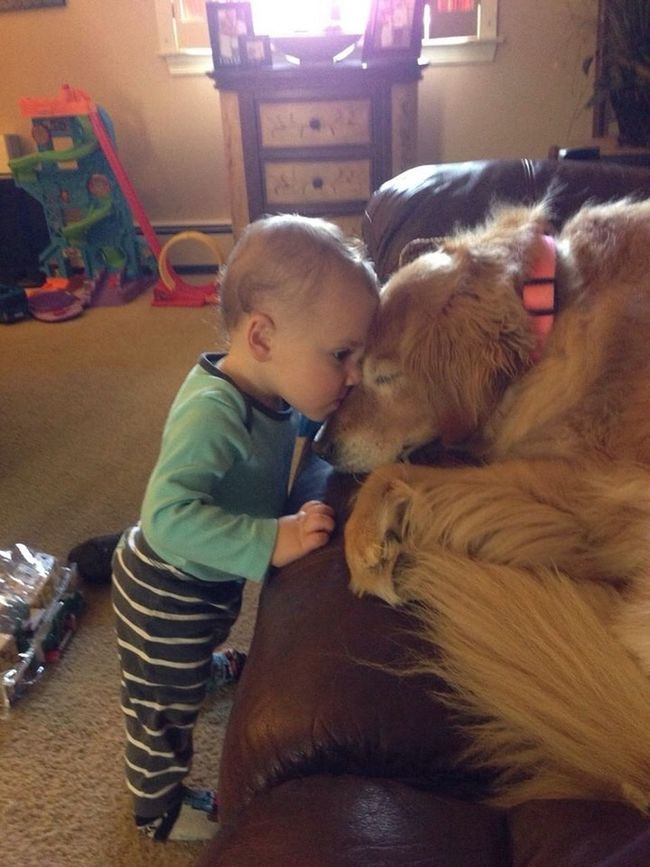 A boy and his dog BabyJoeySaile TheVille Streamzoofamily Hello World