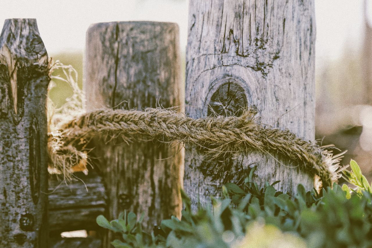 Plant No People Growth Close-up Outdoors Day Water Grass Nature Nature Wooden Post Fence Rope Rustic Style Rustic Beauty Rustic Charm Farm Life Farm Detail Details Of Nature Idyllic Wallpaper Handmade Outdoors Countryside