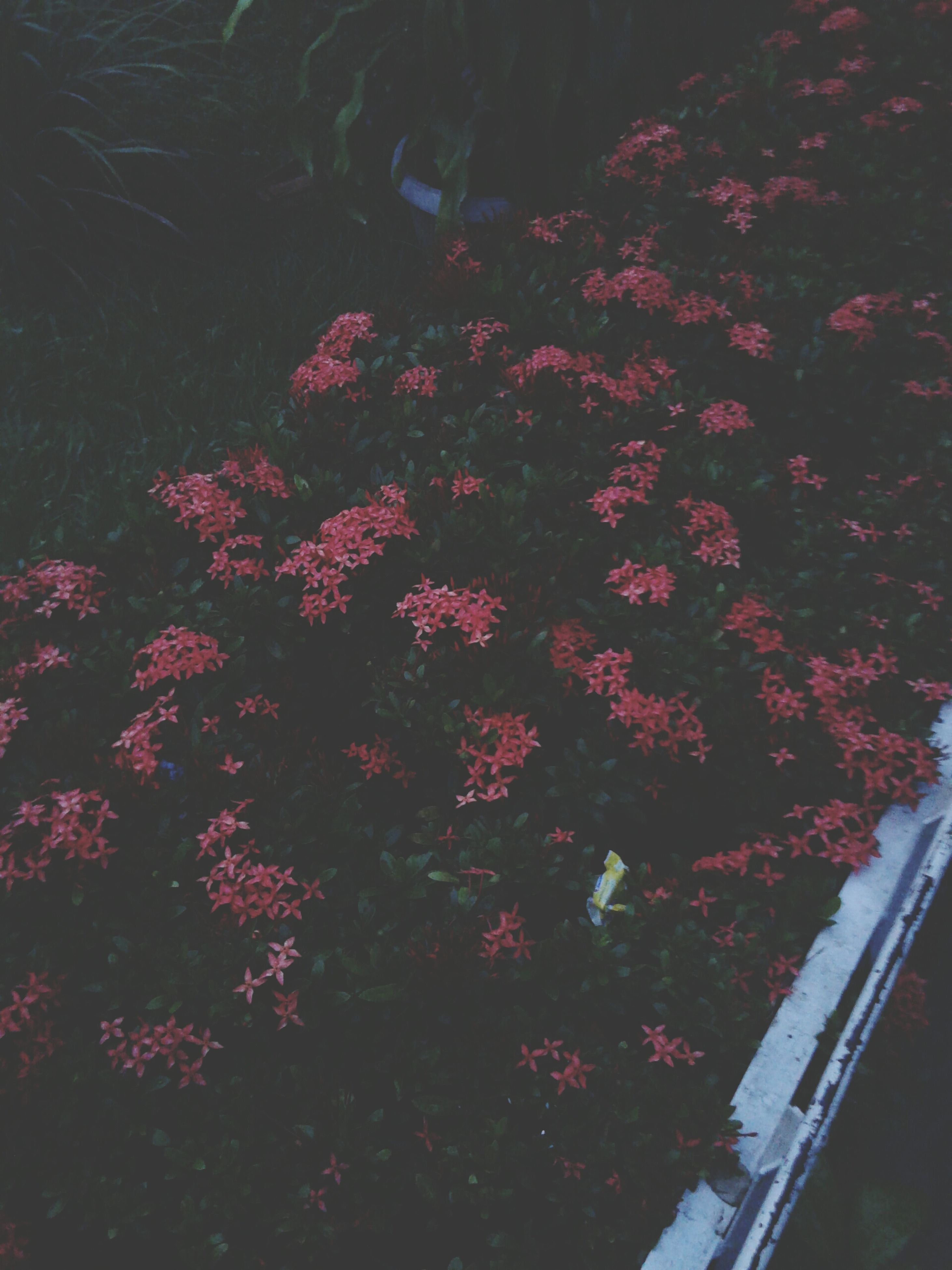 flower, growth, beauty in nature, plant, nature, freshness, high angle view, pink color, fragility, outdoors, tranquility, field, no people, day, sunlight, tree, blooming, park - man made space, leaf, in bloom