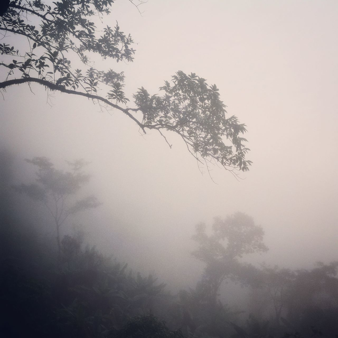 Nature Tree Fantasy Fog Forest Sunset Backgrounds No People SilhouetteThailand Nort Thailand Beauty In Nature Branch Sky Outdoors Close-up Day