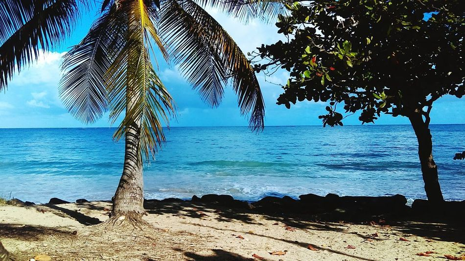 Beach Water Horizon Over Water Nature Tree Scenics Beauty In Nature Vacations Outdoors Tranquility No People Palm Tree Growth Sand Ocean View , tranquil scene Finding New Frontiers Uniqueness