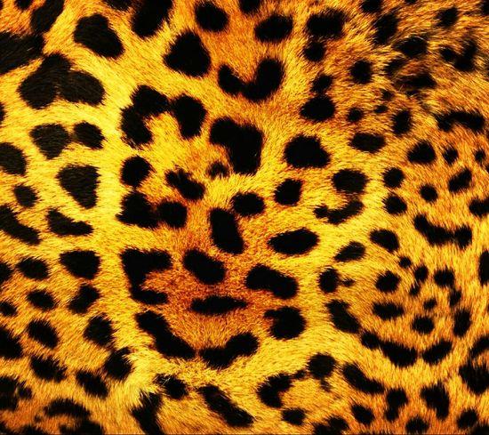 Cheetah-printed