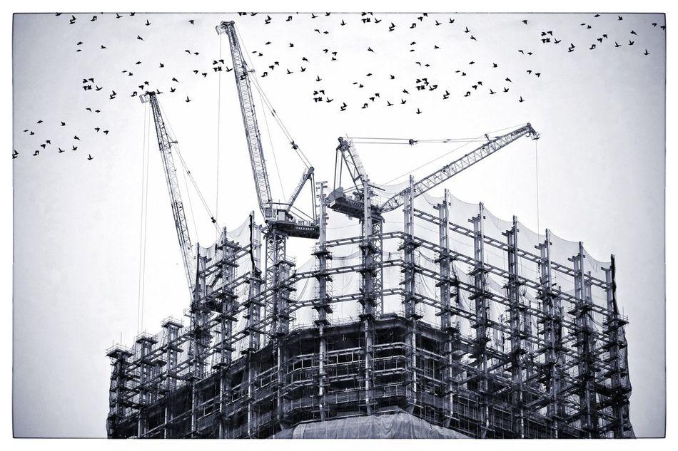 Beautiful stock photos of construction, Architecture, Auto Post Production Filter, Bird, Building Exterior